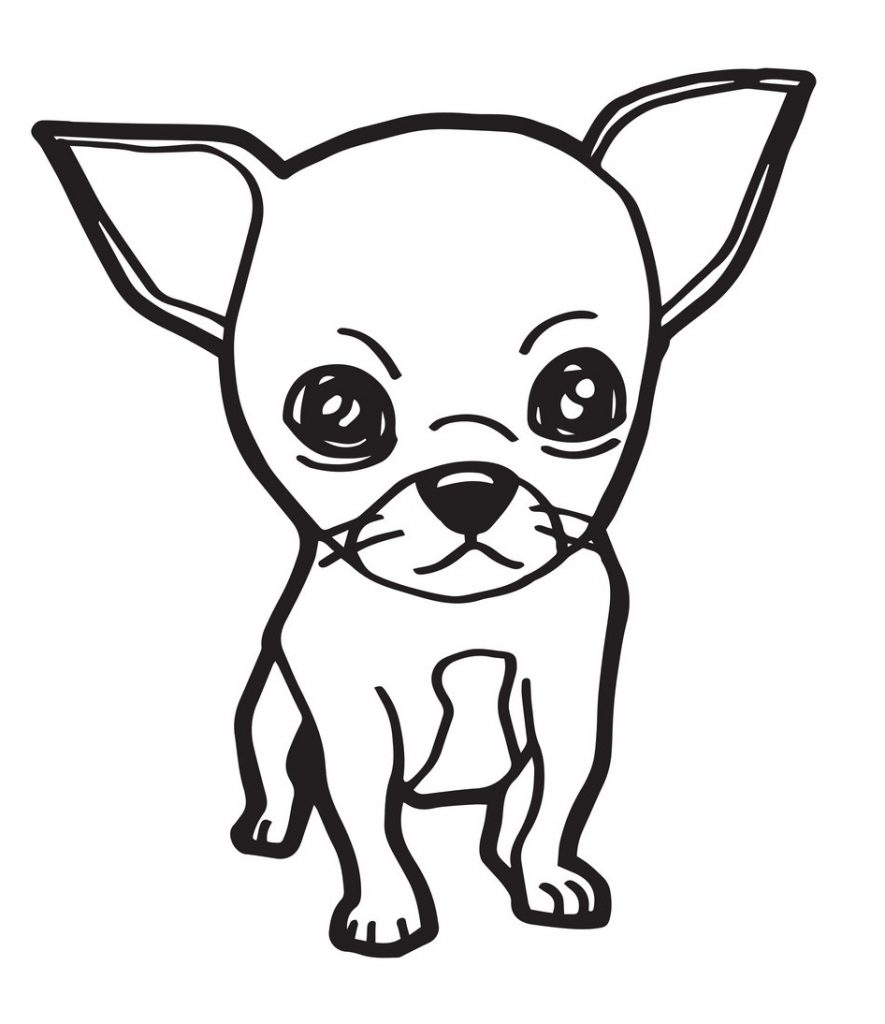 A Lovely Chihuahua