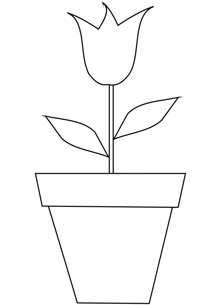 Tulip in a Pot