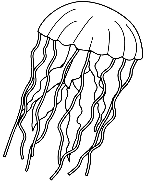 Normal Jellyfish