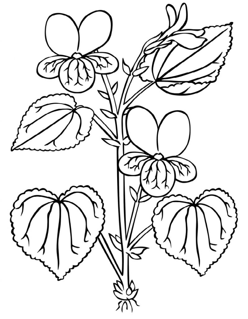 Printable Stream Violet coloring page for both aldults and ...
