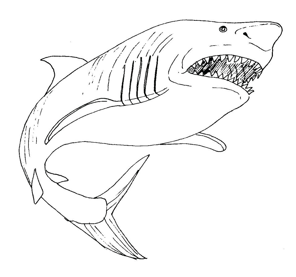 Sharks - Free printable Coloring pages for kids | 894x957