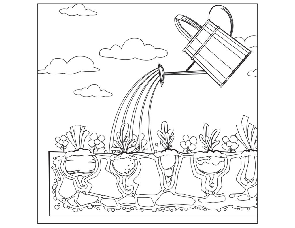 Watering for Vegetables