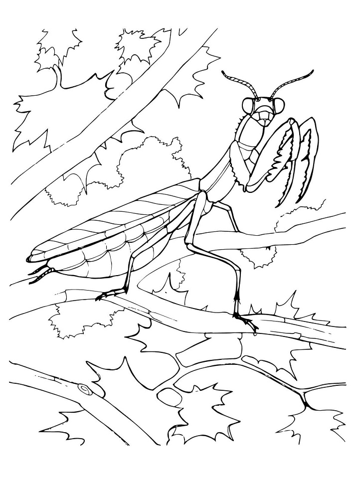 Printable Praying Mantis Coloring Page For Both Aldults And Kids