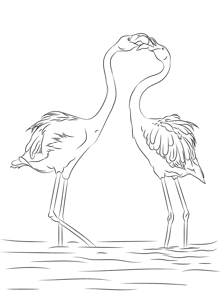 Two Beautiful Flamingo