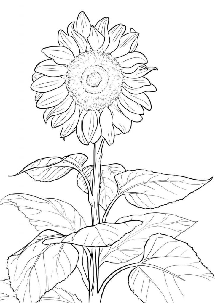 7 Sunflower Coloring Pages for Adults | FaveCrafts.com | 1024x725
