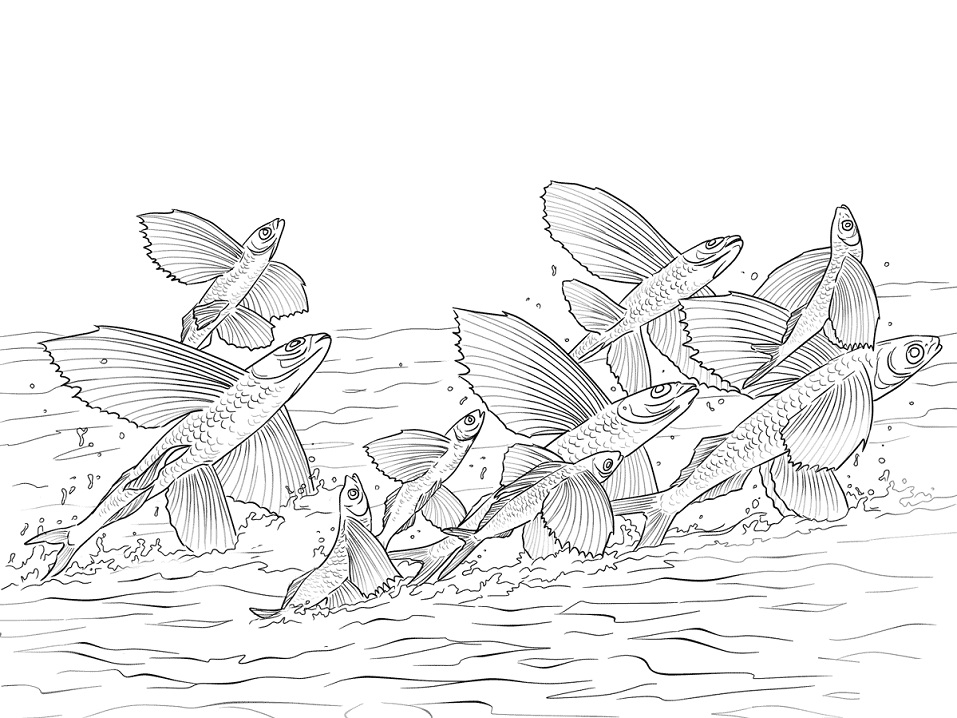 Flying Fishes Shoal