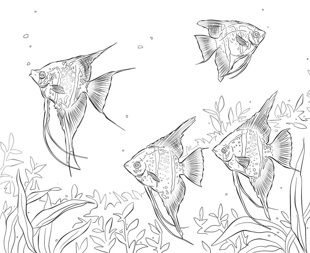 Freshwater Angelfishes