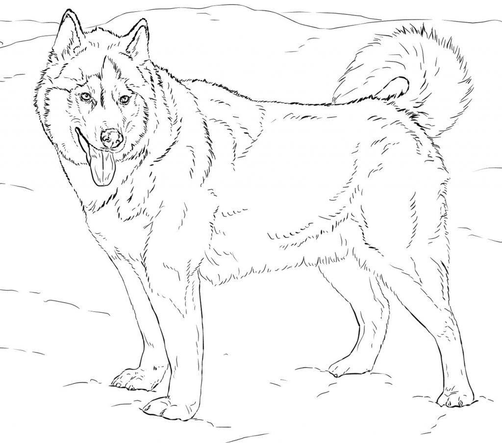 Printable Alaskan Husky coloring page for both aldults and ...