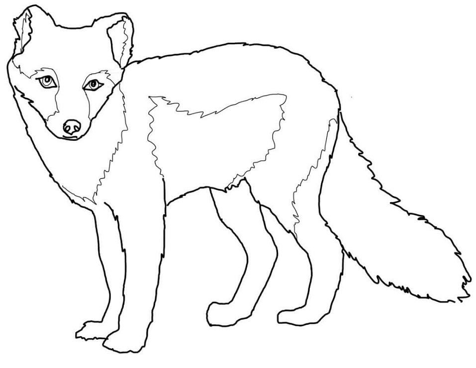 Arctic Fox Summer Coat