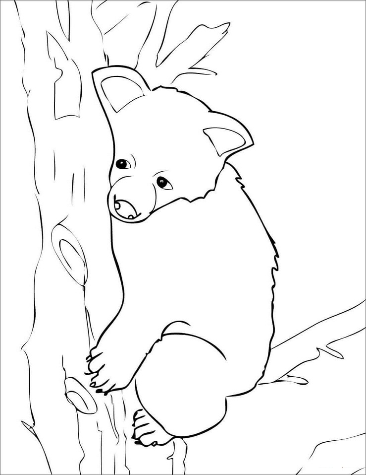 Sad Brown Bear Cub