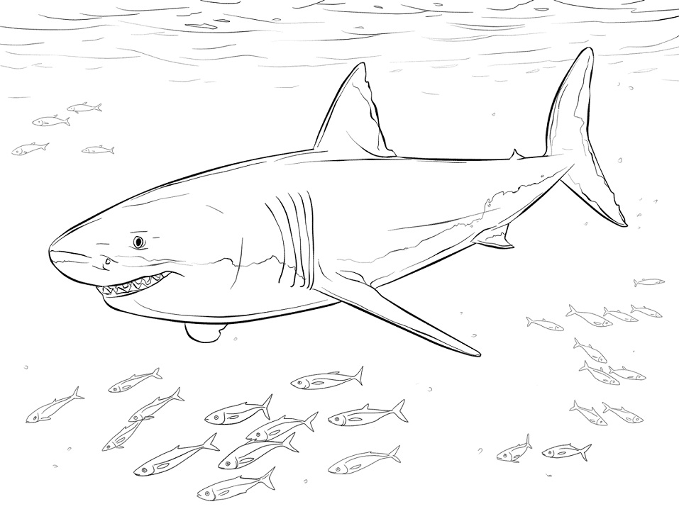White Shark with Fishes