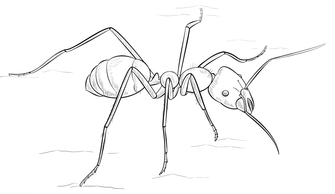 Meat Eater Ant