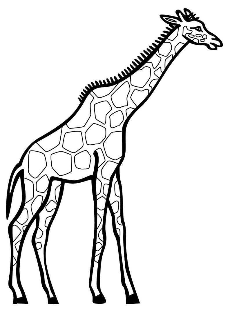 Normal Giraffe